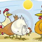 rooster-hens-9018627